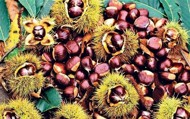 Nut trees: are they all they're cracked up to be?