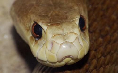 Australia's deadliest creatures