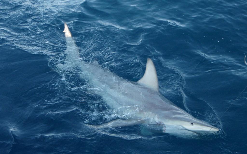 Shark kills Australian wildlife worker on Great Barrier Reef