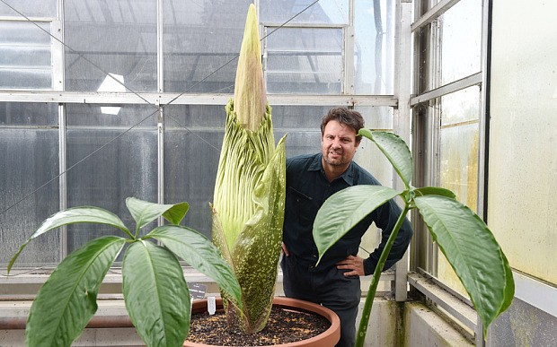 Thousands queue in Australia to smell flesh-odoured corpse flower which blooms every 1000 days