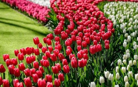Top 20 tips for planting bulbs
