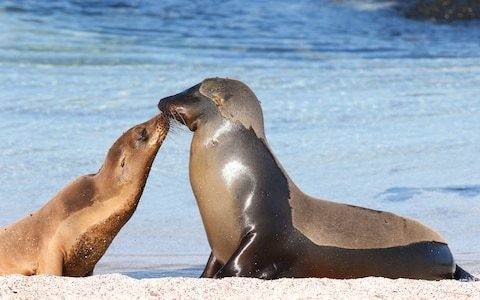 'My childhood dream is not without sacrifices': the reality of being a Galapagos Islands guide