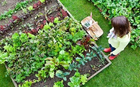 How to improve raised beds and a tip for autumn hedges, by garden expert Helen Yemm