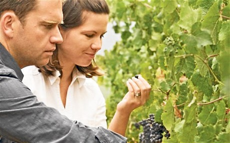 South African wine: the Cape crusaders