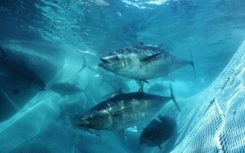 'Fake fish' start-up BlueNalu raises $20m to become the seafood equivalent to Beyond Meat