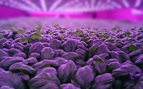 Scotland's first vertical farm gets £5.4m funding boost