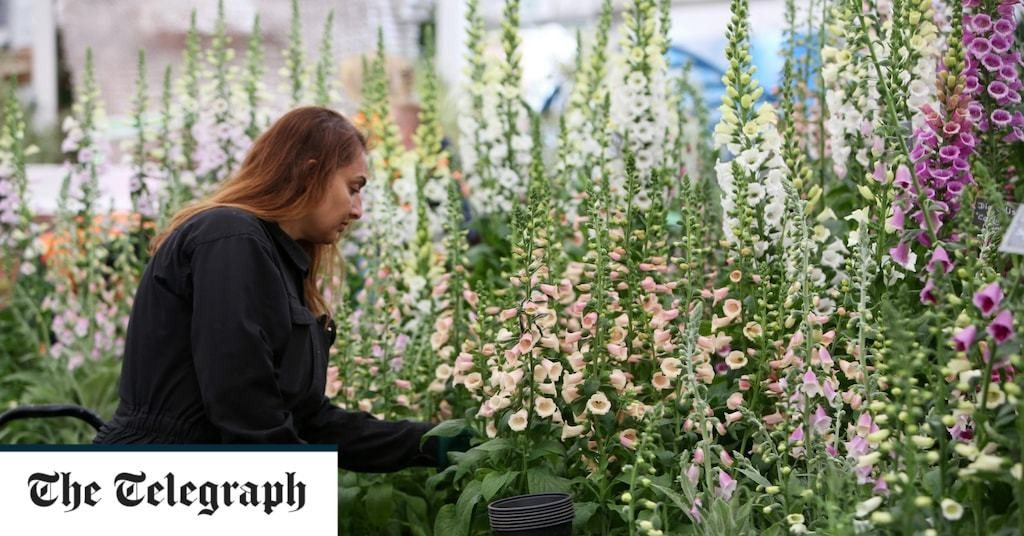 Houseplants to be judged at Chelsea for the first time after indoor gardening thrived during lockdown