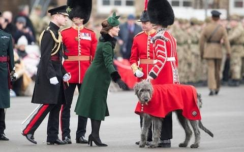 Soldiers 'furious' at overworked mascot dog driven to his 'deathbed'
