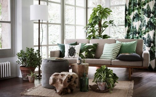 Green revolution: how the houseplant became hip again