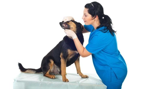 Make sure you aren't breaking the law: take your pet to the vet