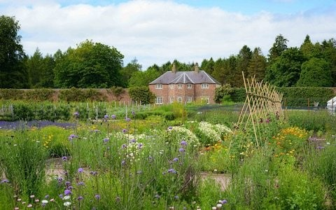'We've learned a lot by trial and error': how two novice gardeners rejuvenated the walled garden at Gordon Castle in Scotland