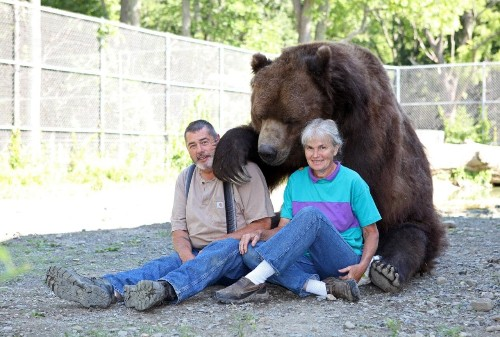 Couple care for Jimmy the 9 foot orphaned bear