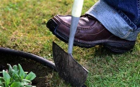 What to do in the garden this week: trim your lawn edge