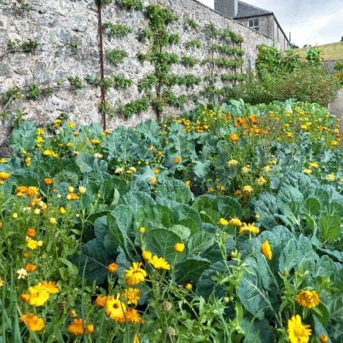 10 ways to make the most of a garden wall