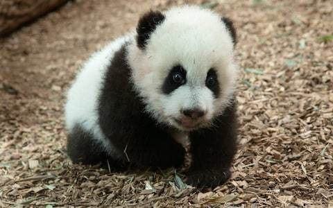 Zoos have Twitter battle to find the cutest animal