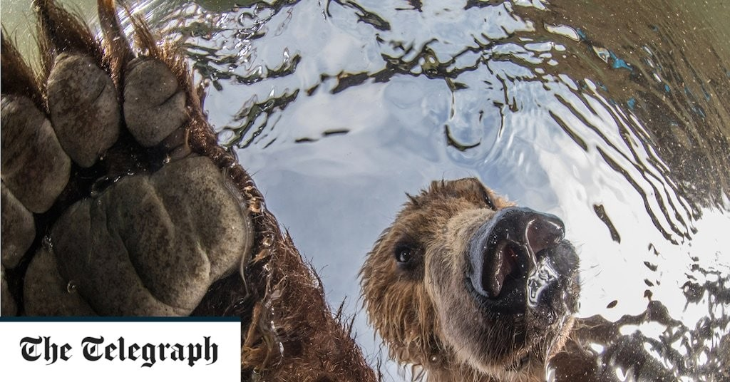 11 award-winning photos that capture nature at its most dazzling