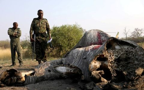 Botswana lifts ban on elephant hunting as it seeks to win over rural voters ahead of election
