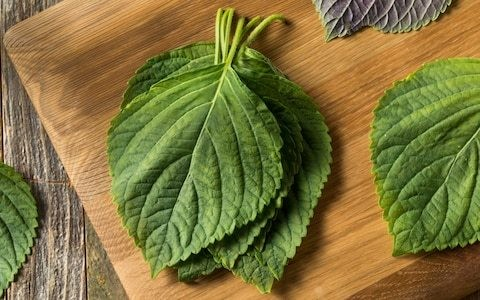 Love Japanese food? Here's how to grow perilla, the herb behind shiso
