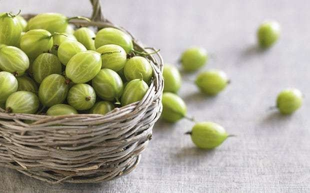 The death of the British gooseberry is nigh
