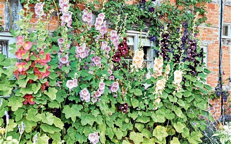 How to grow English cottage garden plants