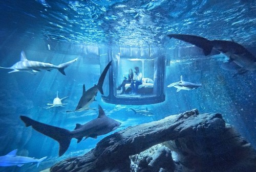 Inside the underwater Airbnb where guests are surrounded by sharks