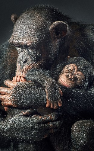 Extraordinary photographs that show the human side of endangered animals