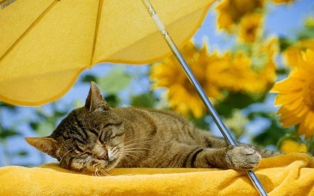 Top tips for a cat-friendly garden