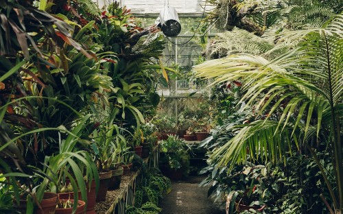 In search of the dream greenhouse: how Instagram has given glasshouses a new life