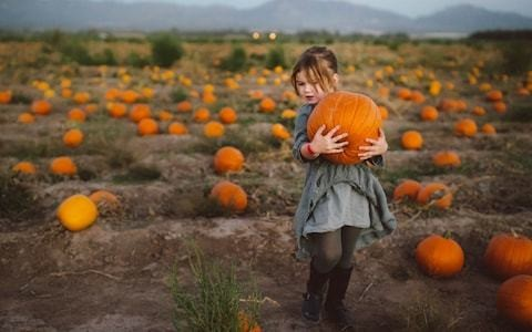 Pick your own pumpkin: the ultimate 2019 guide to Halloween fun - from Essex to Yorkshire