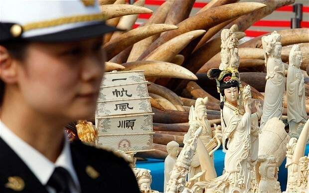 China destroys ivory stockpile in 'significant symbolic step towards saving Africa's elephants'