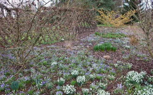 20 great British winter gardens to visit before spring