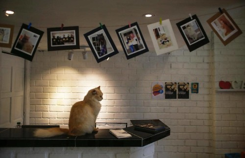 Inside the 'world's first' five-star cat hotel