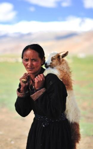 Great Escape: On the trail of India's cashmere goat herders