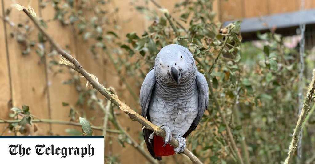 Foul-mouthed parrots separated after ruffling feathers