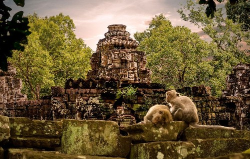 Five of the best Mekong river cruises for wildlife fans