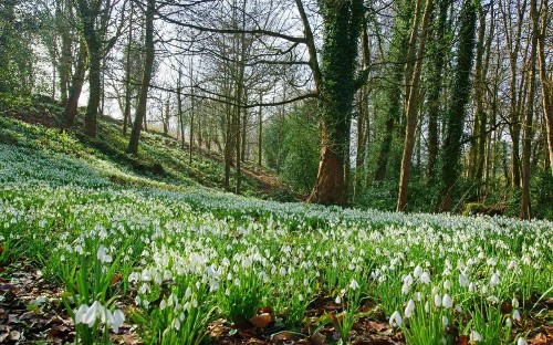 Behind the iconic snowdrop lies an intriguing history of quirky characters