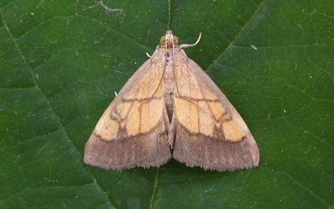 Street lamps should be turned off at night to allow moths to pollinate, say scientists