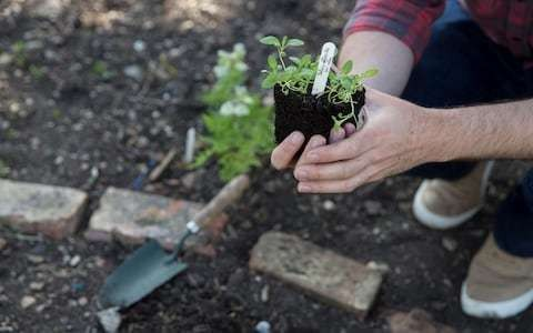 The gentle magic of gardening is hugely therapeutic, the NHS is right to recommend it