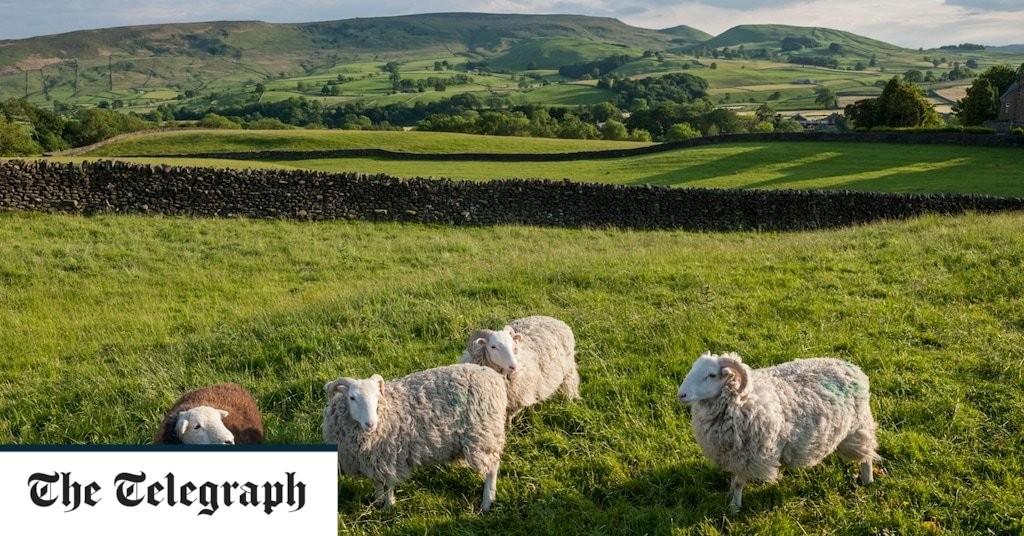 Livestock rustling soared during coronavirus meat rationing, report reveals
