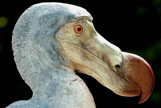 Dodos still exist, say one in four Brits