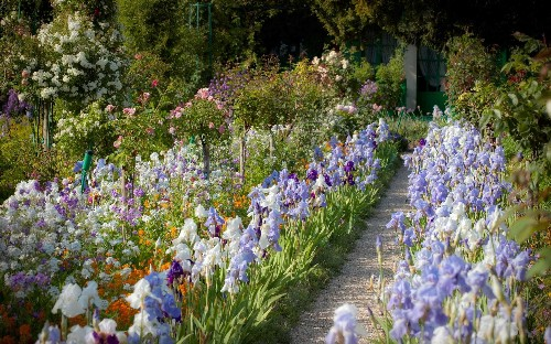 The 10 best irises to inject colour into your herbaceous borders