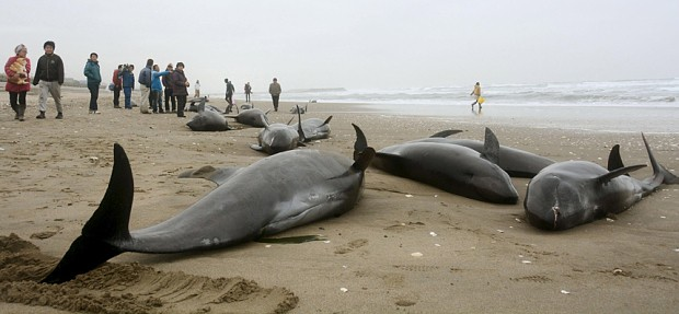 Deaths of 100 dolphins in Japan triggers speculation of earthquake