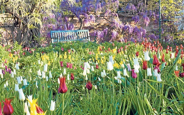 Become a weather expert – you'll be a better gardener