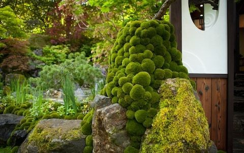 Why moss, the Scandi garden style statement, is definitely not a weed