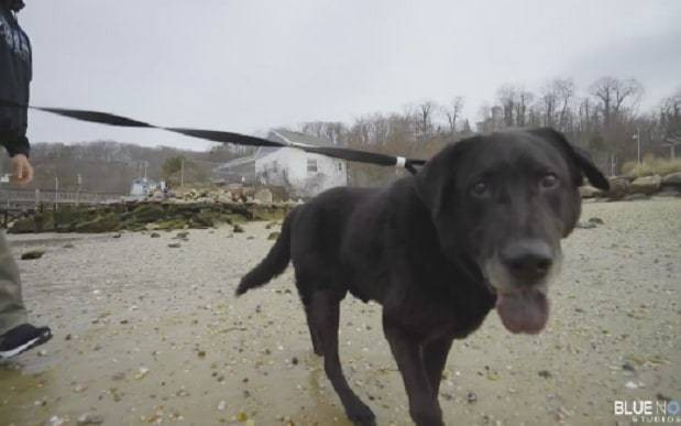 Heartwarming moment dog chained up for 15 years sees the beach for the first time