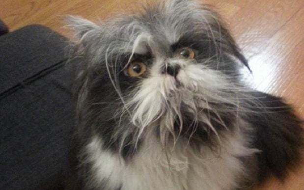 Is this a cat or a dog? Internet falls in love with adorable 'werewolf' Atchoum