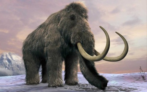 Woolly mammoth will be back from extinction within two years, say Harvard scientists