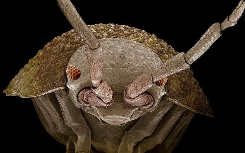 What does a tiny creature look like at the end of the microscope? - Telegraph