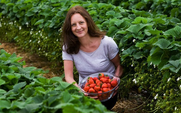 Strawberries: the silver lining to a cloudy spring