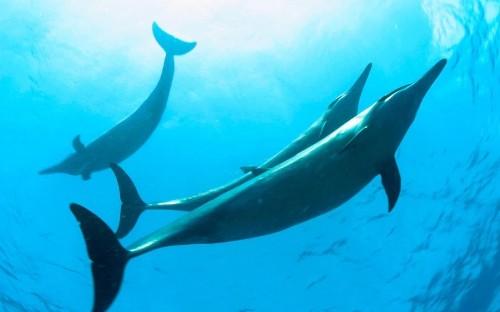Barack Obama creates first US marine reserve in the Atlantic Ocean
